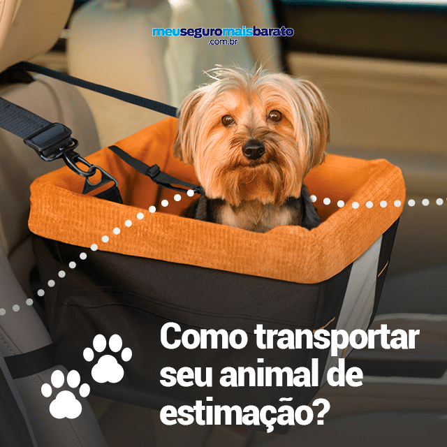 Como transportar seu animal de estimação?